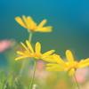 花色季節 近所の花#21