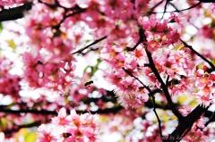 12月桜咲く#3 ぶ~ん