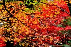 葉色のハーモニー#2