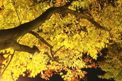 夜の公園で・・・#2