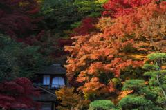 秋に色づく