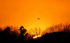赤い夕陽の渡り鳥