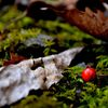 赤い木の実と枯葉