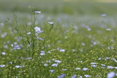 胸に白い花束