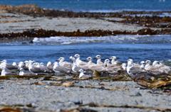 北方領土の海鳥