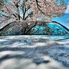 桜化粧 メルversion