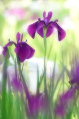 咲き急ぐ花たち