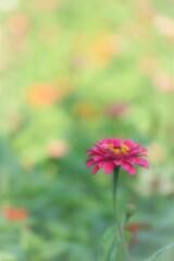 花が咲くわけ