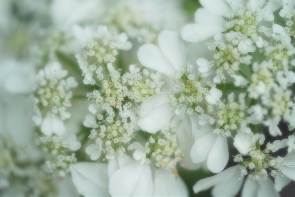 花のレース