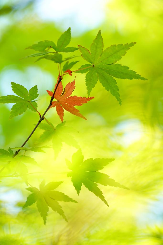 ちょっとだけ秋