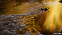 水面(みなも)の秋