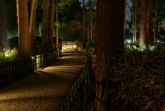 夜の偕楽園2