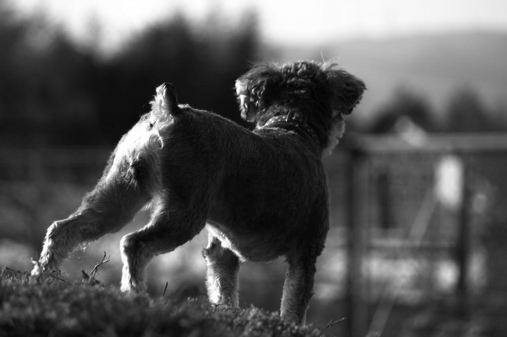 ドックラン 愛犬