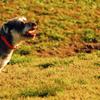 ドックラン|愛犬