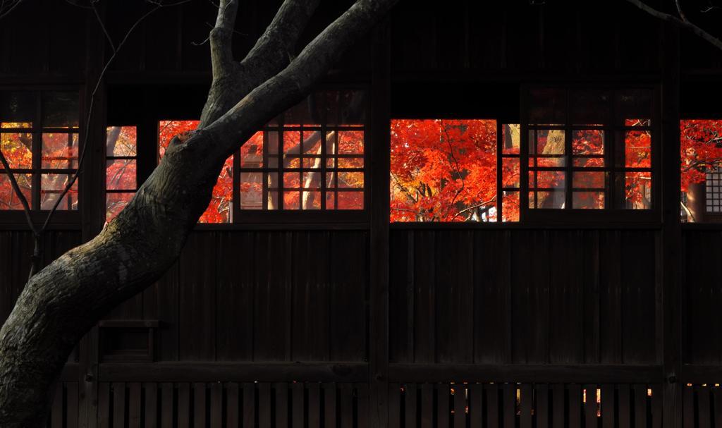 本土寺・秋 (16)