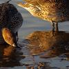 友なる二羽の鳥