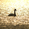 光の中の鳥