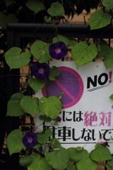 Non Stopで行こう!!
