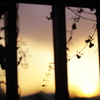夕日と風と