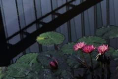 空に咲く花
