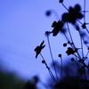 花影ワルツ