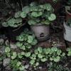 緑の小部屋