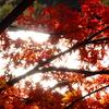 紅葉を照らす秋の陽