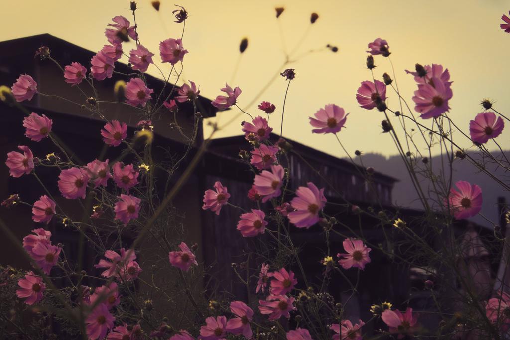 吹かれる花