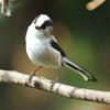 今日の野鳥 2