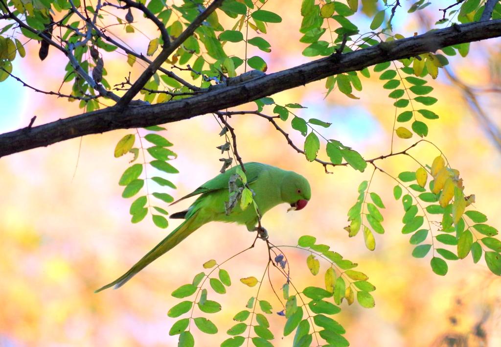 Green  Green   1