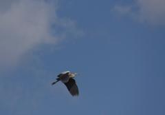 青天を翔ぶ