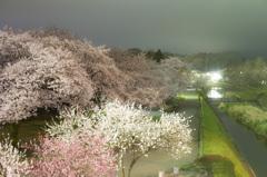桜 20160404-018