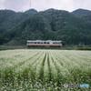 秋の風景 ~蕎麦の花と姫新線~