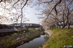桜と智頭鉄道HOT3500形