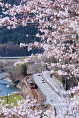 今年の桜は撮り鉄で表現