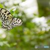 蝶々が撮りたくて