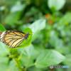 蝶が撮りたくて