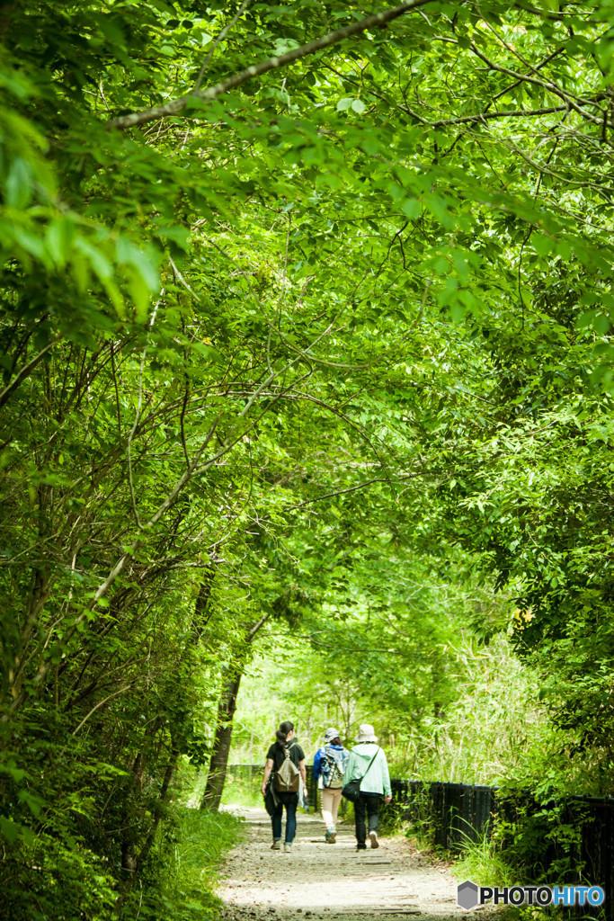 新緑のハイキング~廃線跡~
