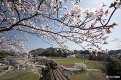 桜とスーパーいなば キハ187