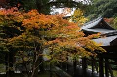 京都 竜安寺紅葉4-3「方丈内紅葉」