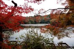 京都 竜安寺紅葉4-2「覗見紅葉」