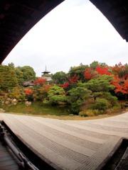 京都 御室仁和寺 10-7「錦秋Ⅱ」