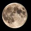 撮れたて「月」