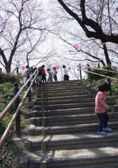 いつもの公園 桜四景 「遠くに行かないから」