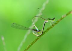 蜻蛉姿態 8-6 「糸」