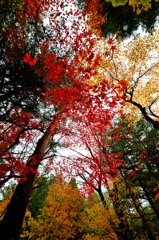 塩原秋景色「錦秋の森」