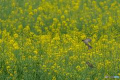 春燕の花(スズメ)(6)