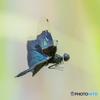 睡蓮池のサンバ(1)