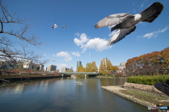 大阪大川「桜ノ宮公園」
