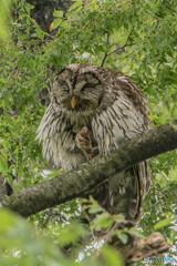 森の賢人「見守り」(2)